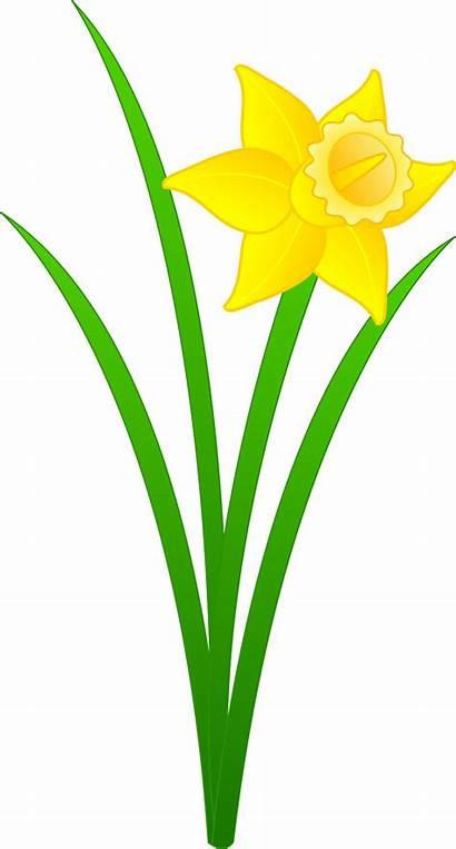 Daffodil Golden Single Clip Flower Yellow Sweetclipart