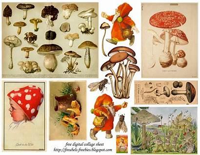 Mushrooms Collage Printable Printables Freubels Domain Freebies