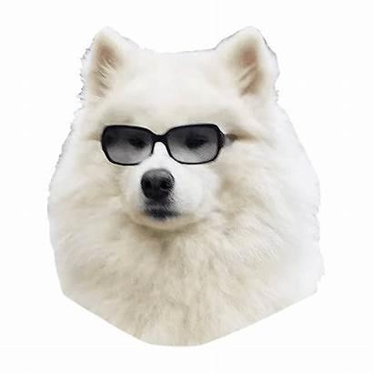 Samoyed Dog Pngimg