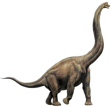 giraffatitan pictures facts dinosaur