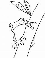 Frog Coloring Tree Frogs Pages Drawing Green Printable Print Drawings Printables Clip Outline Eye Snake Realistic Rainforest Children Drawn Eyed sketch template