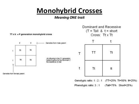 Genetic Worksheet Answers - Oaklandeffect