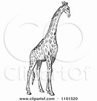 Best Giraffe Clip Art Black And White Ideas And Images On Bing