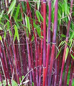 Bambus Im Garten : die besten 25 bambus garten ideen auf pinterest bambus garten ideen bambus garten und ~ Markanthonyermac.com Haus und Dekorationen