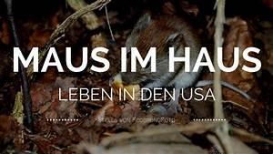 Maus Im Haus : wir haben eine maus im haus mausefalle doch welche ~ A.2002-acura-tl-radio.info Haus und Dekorationen