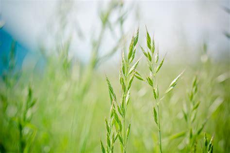 gambar alam cabang menanam bidang halaman rumput