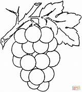Coloring Grape Pages Printable Drawing Paper Skip Puzzle Supercoloring sketch template