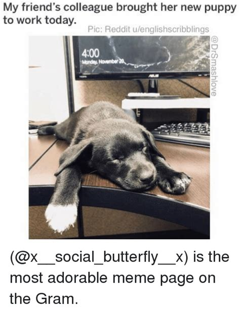 Puppy Meme - 25 best memes about reddit reddit memes