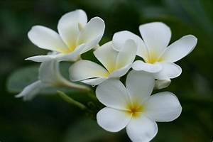 White Flowers Names And Images 12 Free Hd Wallpaper ...
