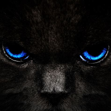 Black Cat With Blue Eyes Ipad Hd Wallpapers