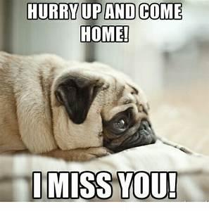 I Miss You Animal Meme