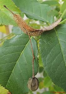 Stickstoffmangel Bei Pflanzen : samenverbreitung bei pflanzen ~ Lizthompson.info Haus und Dekorationen