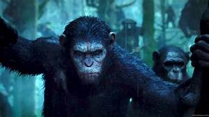 Caesar Planet Of The Apes Wallpapers - Wallpaper Cave