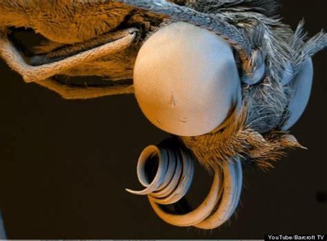 microscopic insect  plant camera system nanoflight