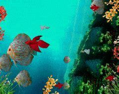 Animated Aquarium Wallpaper Gif - reef aquarium gifs search find make gfycat gifs