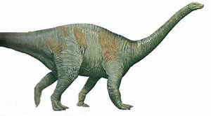 Riojasaurus Pictures & Facts - The Dinosaur Database