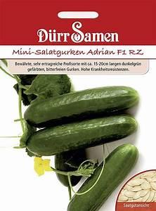 Mini Gurken Pflanzen : mini gurken adrian f1 rz saat gut ~ Buech-reservation.com Haus und Dekorationen