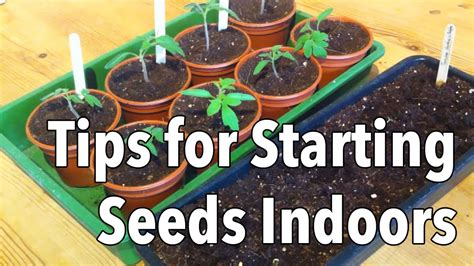 top tips for starting seeds indoors