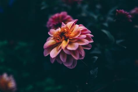 free stock photos for free download about 105 587 free