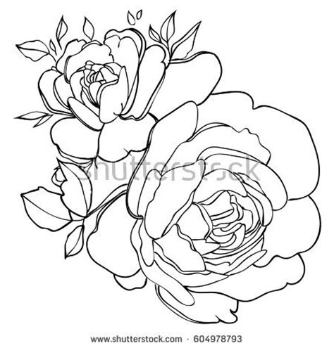 rose outline stock images royalty  images vectors
