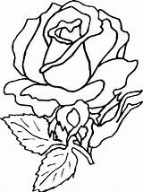 Rose Coloring Flower sketch template