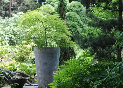 japanese garden planters japanese gardens 10 handpicked ideas to discover in other gardens wisteria and planters