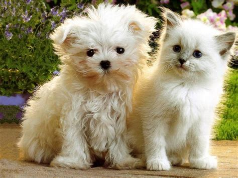 Cute Kittens And Puppies Kitten And Puppy