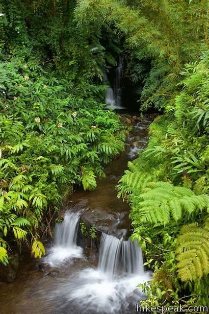 Akaka Falls Trail State Park Loop Cascades