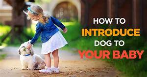 how to introduce dogs to baby preparing your dog for the With how to introduce a new dog to your dog