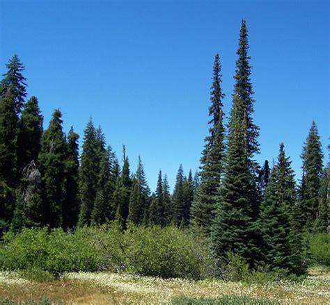christmas tree permits on sale this weekend kpcw