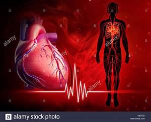 Illustration Of Human Heart Beat Diagram Stock Photo  74677810