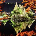 hisao mogi maple bright color maple tree photograph by hisao mogi