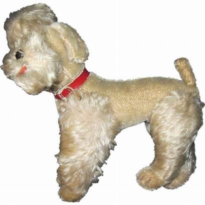 Poodle Steiff Dog Buyers