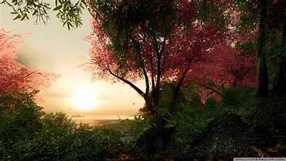 Sakura Crysis Bing Fall Wide Wallpapers Background