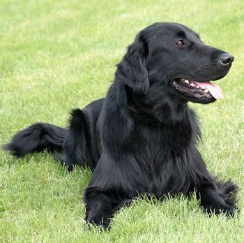 dog zone dog breeds  information