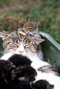 for cats to squirrels 450 cat and squirrel