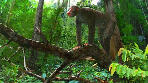 proconsul dendropithecus  research sheds light