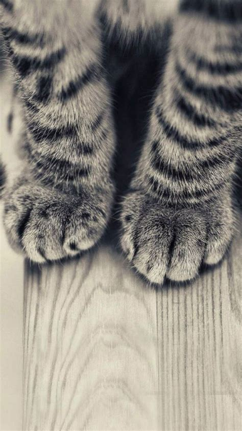 Hd Animal Iphone Wallpapers - animals iphone 6 plus wallpapers striped kitten legs