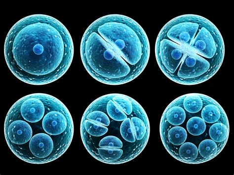 Everything Worth Knowing About ... Stem Cells