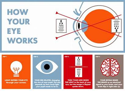 Eye Parts Eyes Vision Works Anatomy Lenscrafters