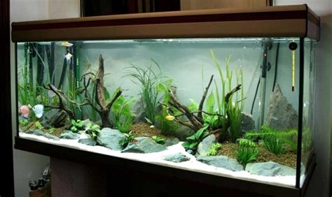 bathroom wall color ideas 100 ideas integrate aquarium designs in the wall or in the