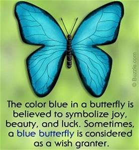 What39s The Meaning Of A Blue Butterfly And What Does It Signify Cinderella Butterflies And