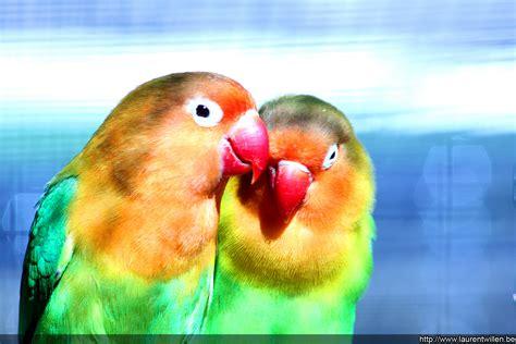 bureau qui se ferme fonds d écran gratuits oiseaux exotiques laurent willen
