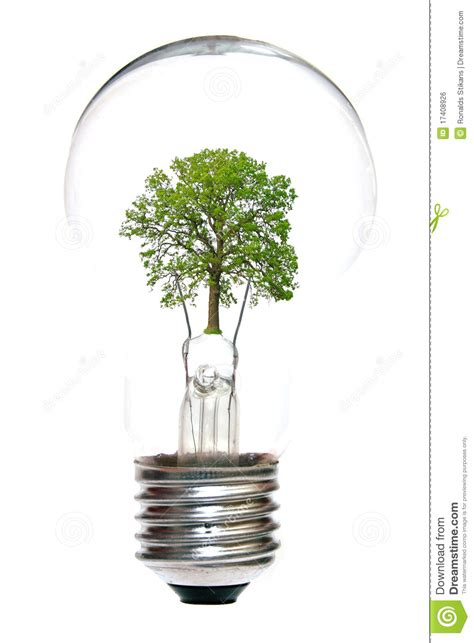 inside of a light bulb light bulb with tree inside royalty free stock image