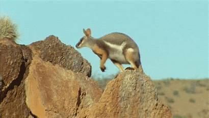 Kangaroo Giphy Gifs Favim Animated Newbeginnings2 Tweet