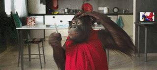 catatan engz gambar animasi bergerak monyet lucu