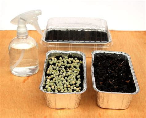 Grow An Indoor Salad Garden With Soil Sprouts-a Piece Of