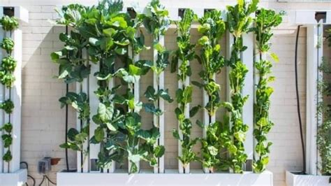 Of Vertical Gardens by New Vertical Garden Allows Cloverdale Food Bank To Serve