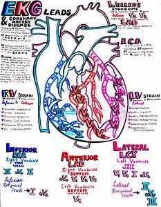 Ekg And The Coronary Arteries U2026you U2019ll Find The Perfect