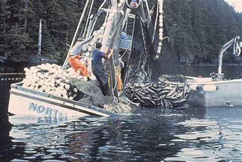 Crab Boat Destination Cause Of Sinking by No One In Alaska Died Alaska Department Of Fish And Game